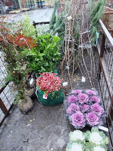 f:id:tosshii-plants:20201226220950j:image