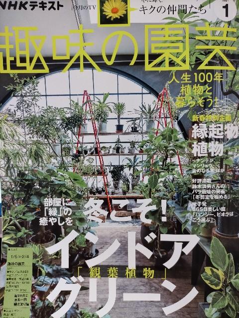 f:id:tosshii-plants:20210105231454j:image