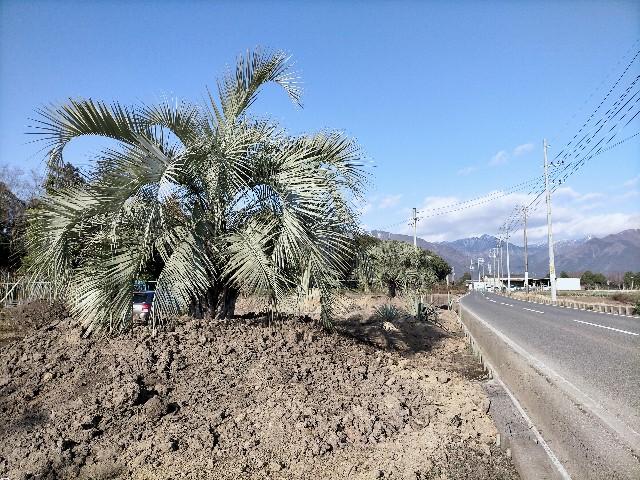f:id:tosshii-plants:20210107204545j:image