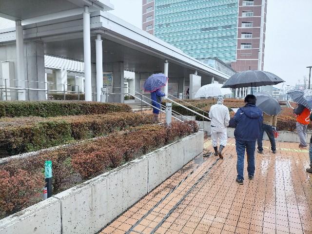 f:id:tosshii-plants:20210123183554j:image