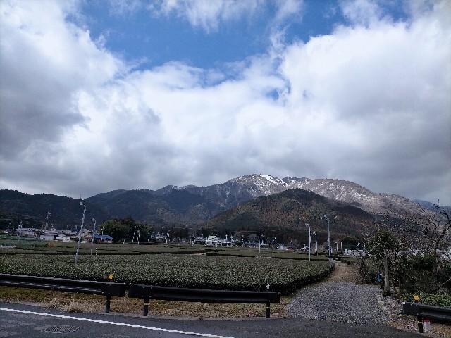 f:id:tosshii-plants:20210131230150j:image