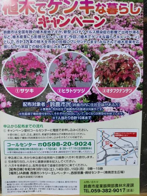 f:id:tosshii-plants:20210204215154j:image