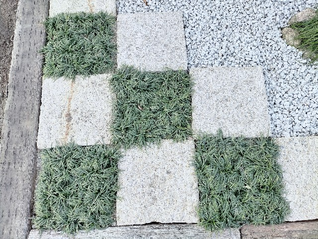 f:id:tosshii-plants:20210225222049j:image