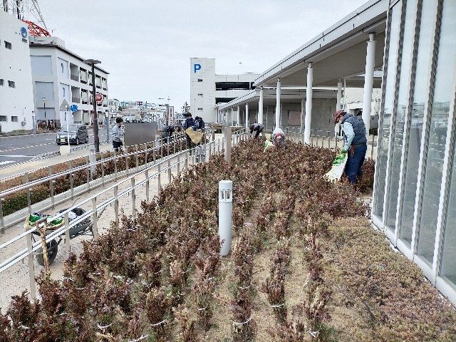 f:id:tosshii-plants:20210228192820j:image
