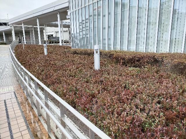 f:id:tosshii-plants:20210228192913j:image