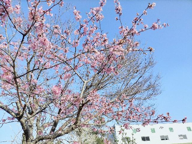 f:id:tosshii-plants:20210309154245j:image