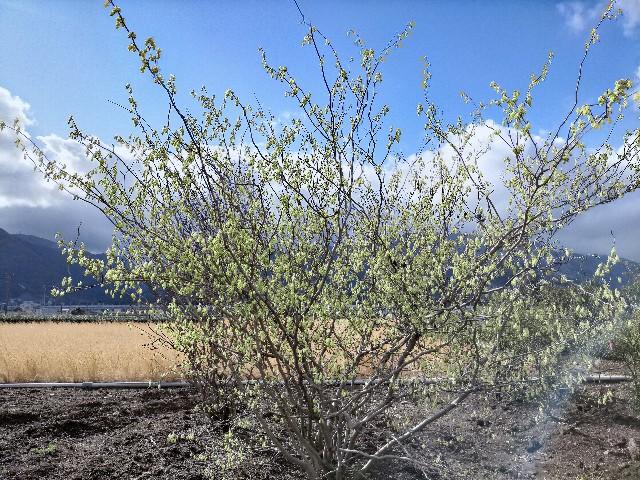 f:id:tosshii-plants:20210313224924j:image