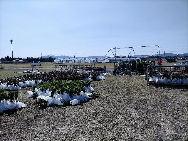 f:id:tosshii-plants:20210316211639j:image