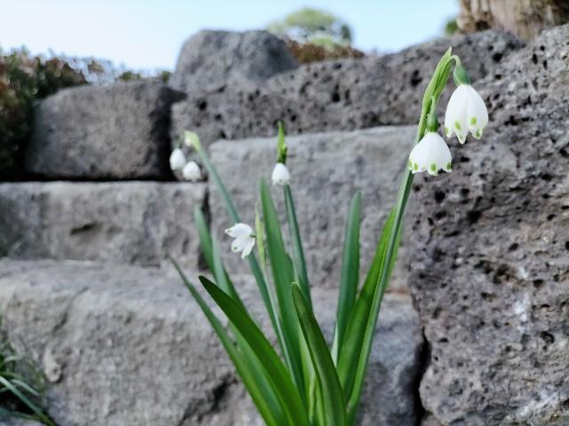 f:id:tosshii-plants:20210321165007j:image