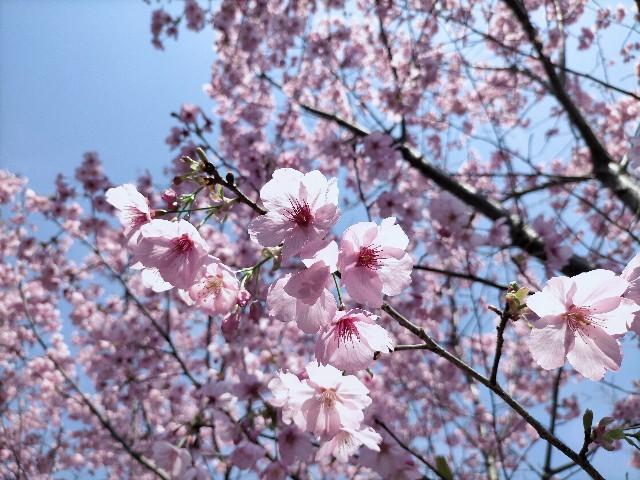 f:id:tosshii-plants:20210324231205j:image