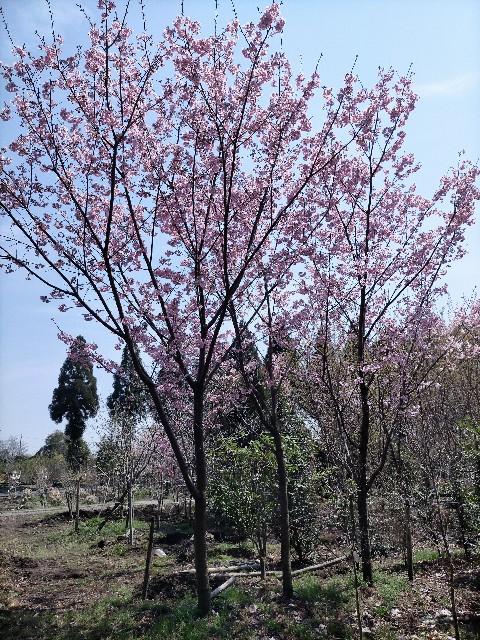 f:id:tosshii-plants:20210324231229j:image