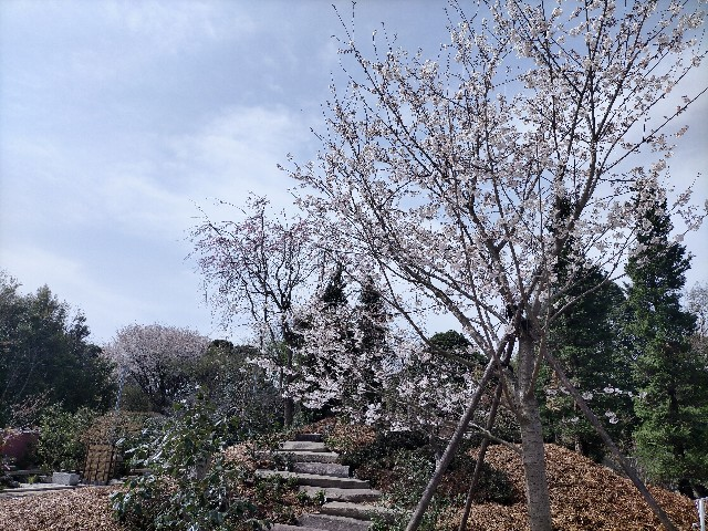 f:id:tosshii-plants:20210330161400j:image
