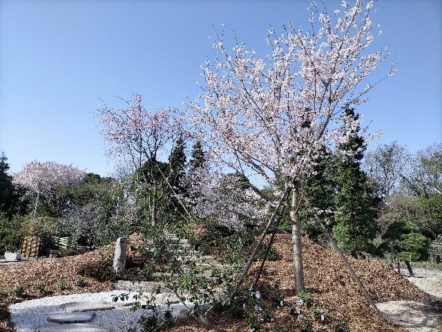 f:id:tosshii-plants:20210401132135j:image