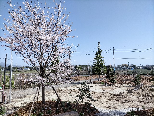 f:id:tosshii-plants:20210401132209j:image