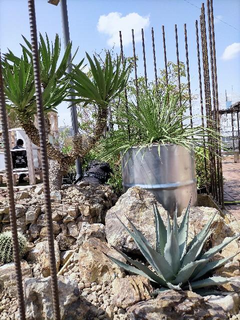 f:id:tosshii-plants:20210402213026j:image