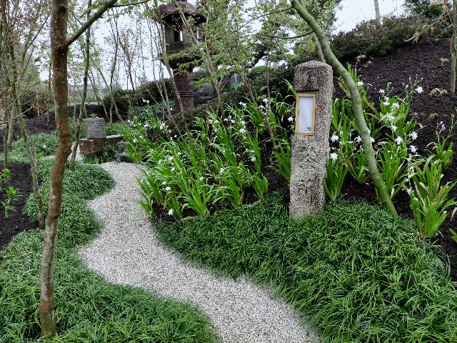f:id:tosshii-plants:20210404231039j:image
