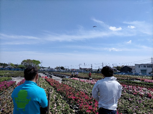 f:id:tosshii-plants:20210410193342j:image