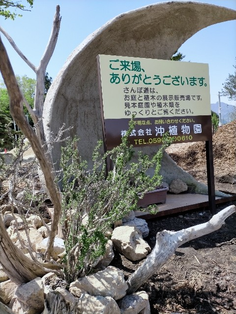 f:id:tosshii-plants:20210421213021j:image