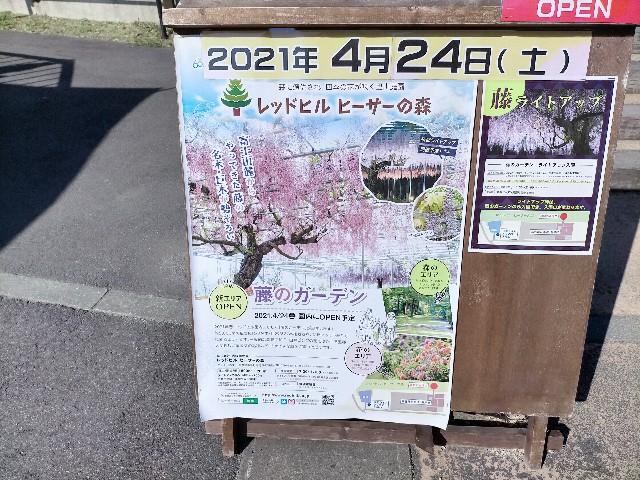 f:id:tosshii-plants:20210425223645j:image