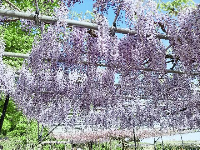 f:id:tosshii-plants:20210425223732j:image