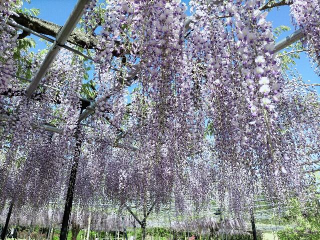 f:id:tosshii-plants:20210425224353j:image