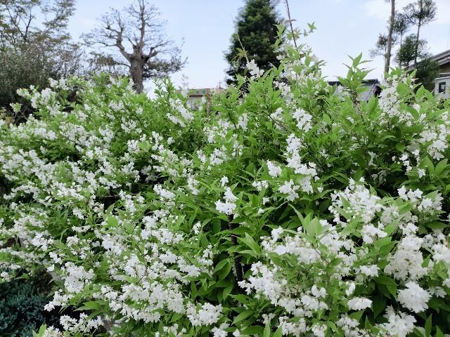 f:id:tosshii-plants:20210430221222j:image