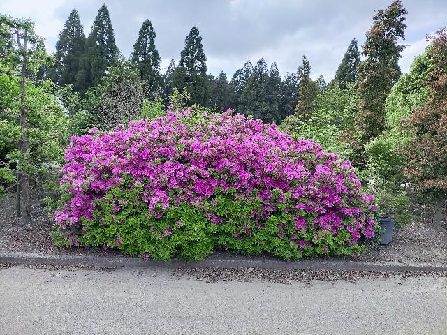 f:id:tosshii-plants:20210502212740j:image