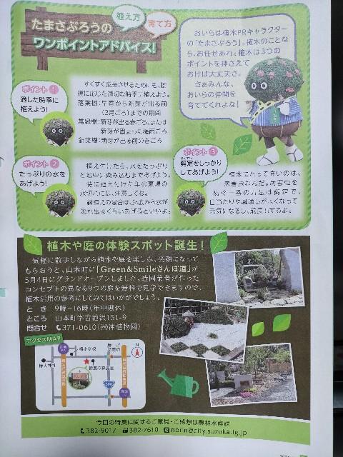 f:id:tosshii-plants:20210503213039j:image