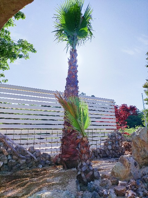 f:id:tosshii-plants:20210506202526j:image