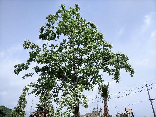 f:id:tosshii-plants:20210508202824j:image