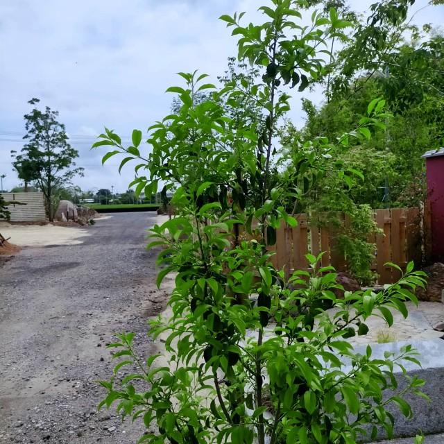 f:id:tosshii-plants:20210603205250j:image