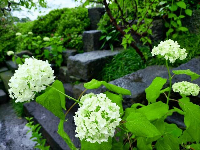f:id:tosshii-plants:20210604210127j:image