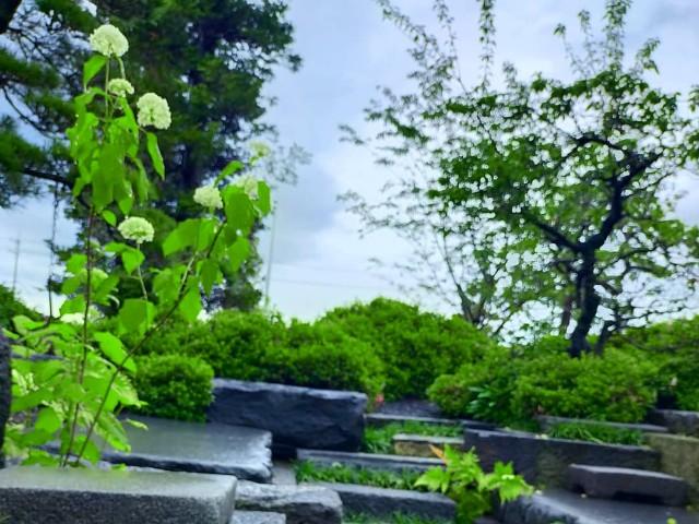 f:id:tosshii-plants:20210604210137j:image
