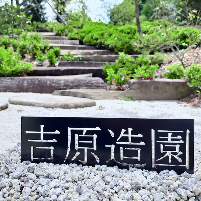 f:id:tosshii-plants:20210606223540j:image