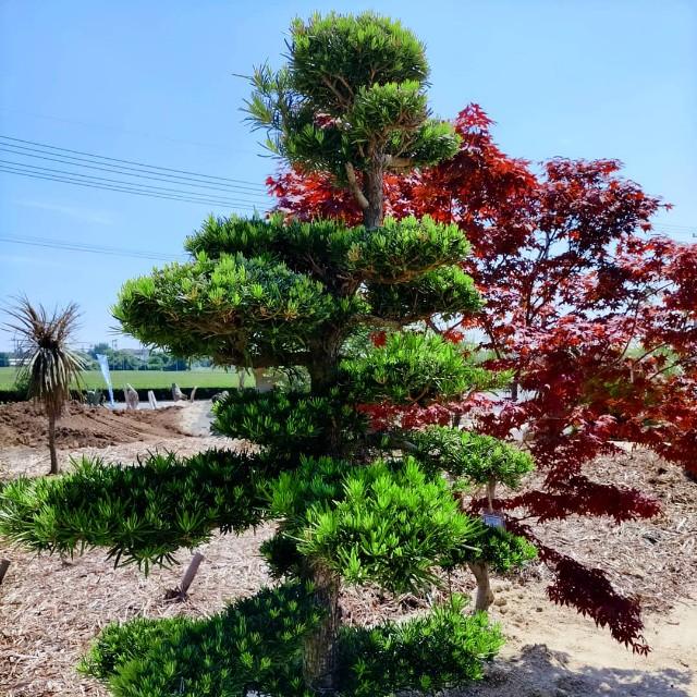 f:id:tosshii-plants:20210609213454j:image
