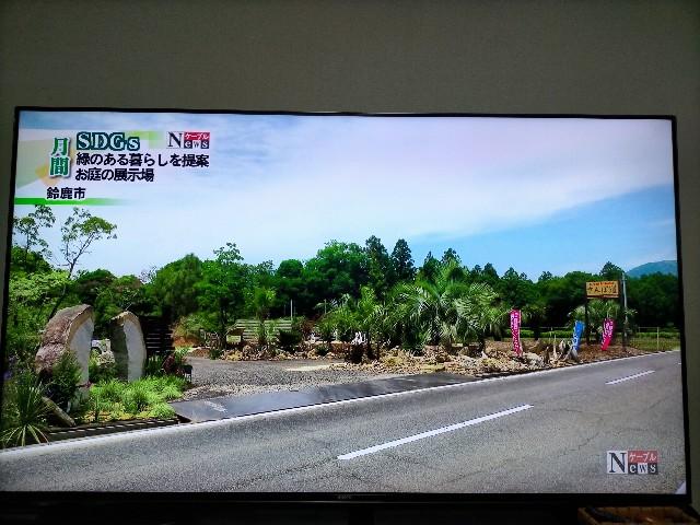 f:id:tosshii-plants:20210614204107j:image