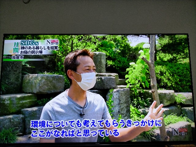 f:id:tosshii-plants:20210614204129j:image