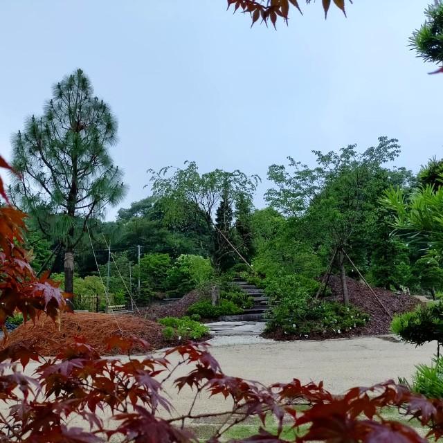 f:id:tosshii-plants:20210702212847j:image