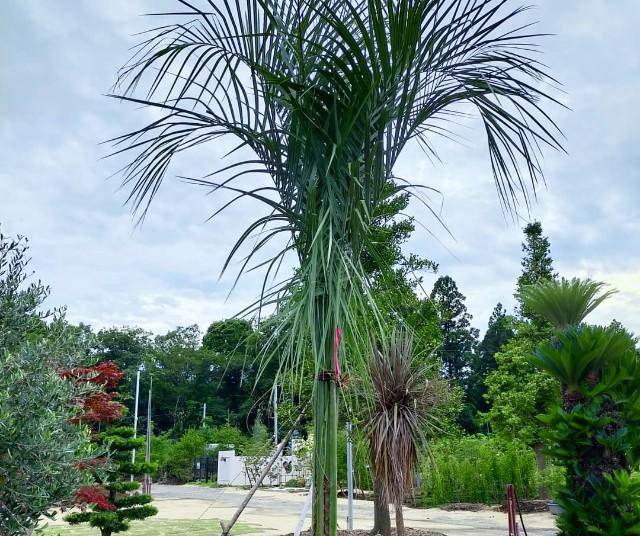 f:id:tosshii-plants:20210703211622j:image