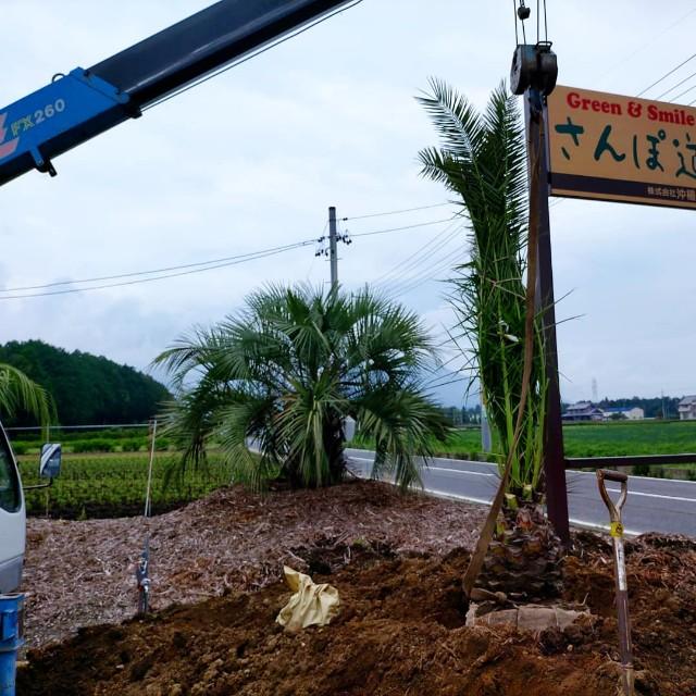 f:id:tosshii-plants:20210706225240j:image