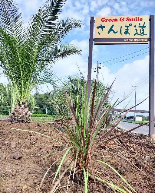 f:id:tosshii-plants:20210709212123j:image
