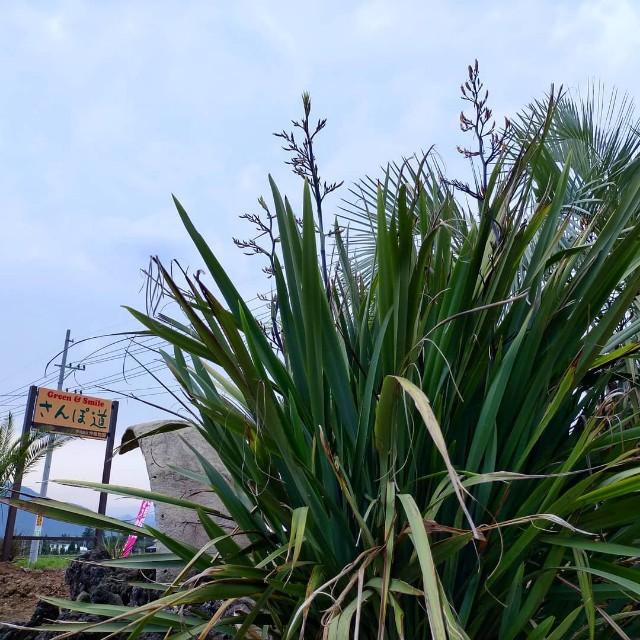 f:id:tosshii-plants:20210711180625j:image