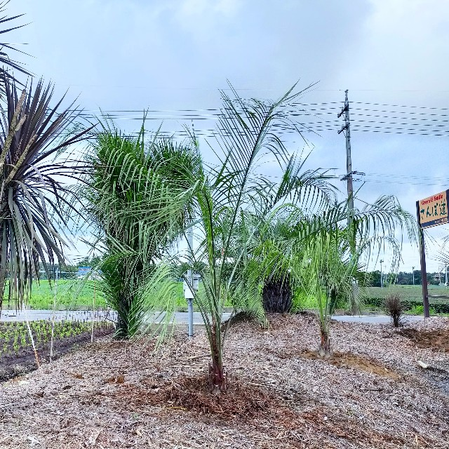 f:id:tosshii-plants:20210716072815j:image
