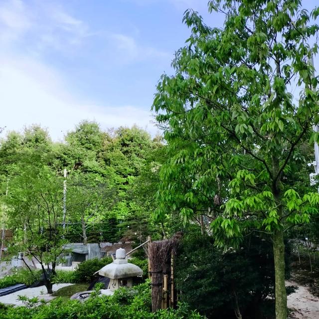 f:id:tosshii-plants:20210720222024j:image