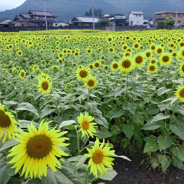 f:id:tosshii-plants:20210801222753j:image