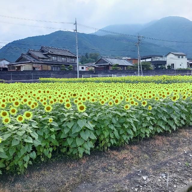 f:id:tosshii-plants:20210801222817j:image