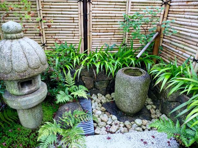 f:id:tosshii-plants:20210803202306j:image