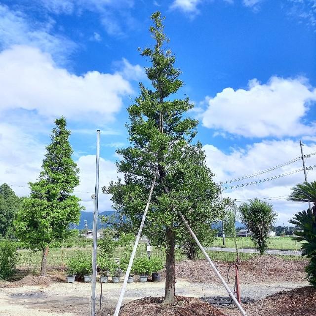 f:id:tosshii-plants:20210811220613j:image