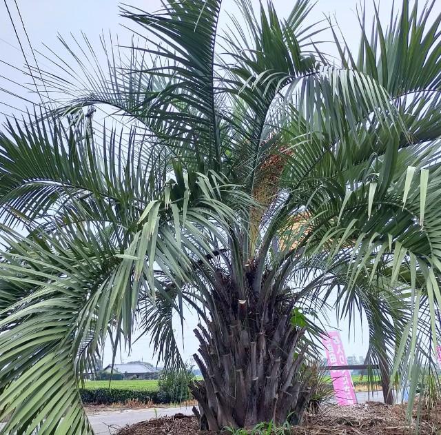 f:id:tosshii-plants:20210813213418j:image
