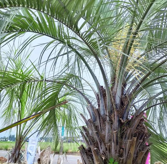 f:id:tosshii-plants:20210813213443j:image